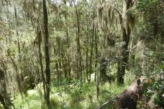 Bromelia-no-lichene-2_rid