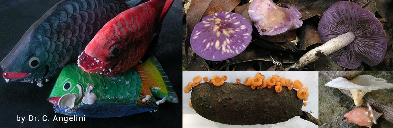 Neotropical Fungi